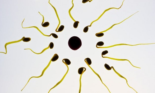 INCREASE SPERM COUNT WITH AYURVEDA