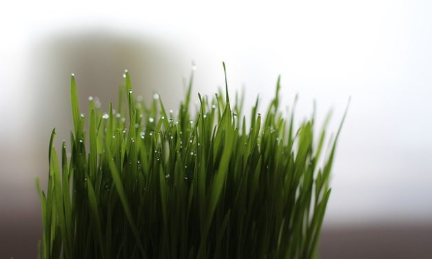 THE ANTI AGING WHEATGRASS-THE BENEFIT OF A NATURAL JUICE