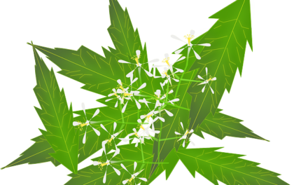 THE USE OF ECLIPTA ALBA IN AYURVEDIC MEDICINE