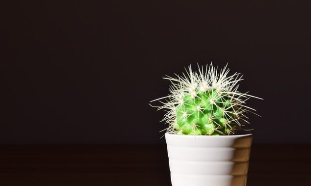 FENG SHUI AND PLANT THEORY